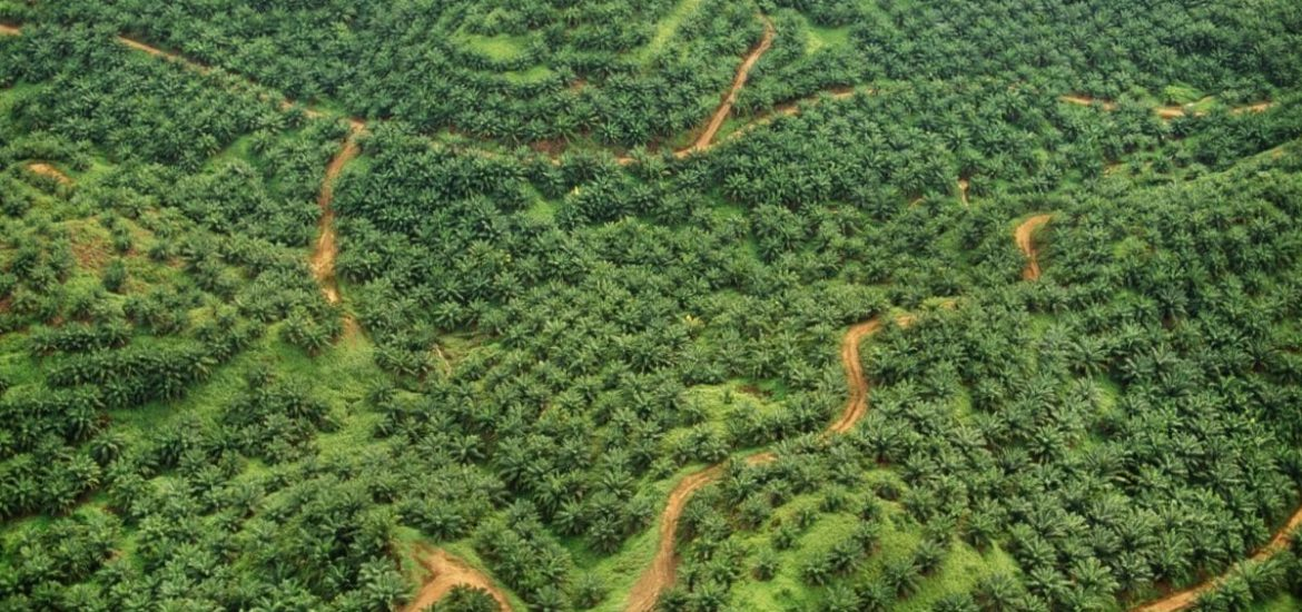 Are palm oil-based biofuels truly eco-friendly?