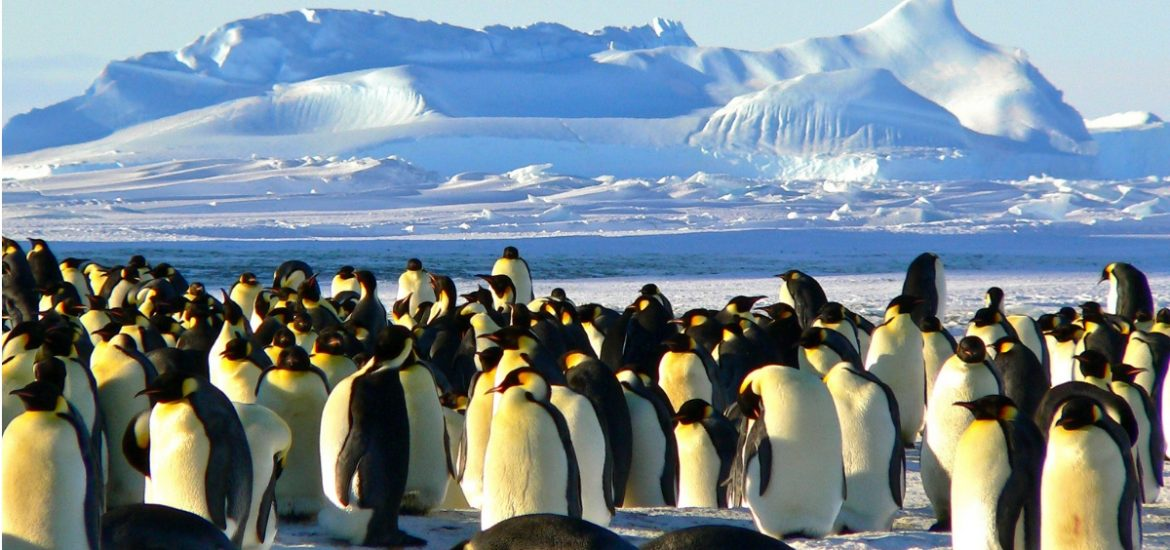 Plight of the penguins: reverse zoonosis is making seabirds sick in Antarctica