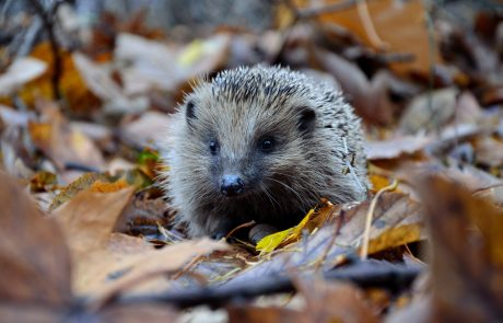 Britain could lose a fifth of its mammal species in 10 years