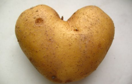 "Some potato stories: A multiple tale of ""anti-GMO"" detrimental nonsense"
