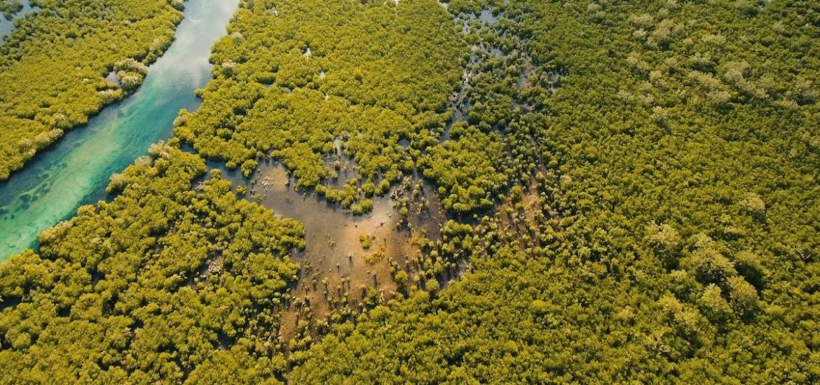 Protected areas do not effectively safeguard against human encroachment