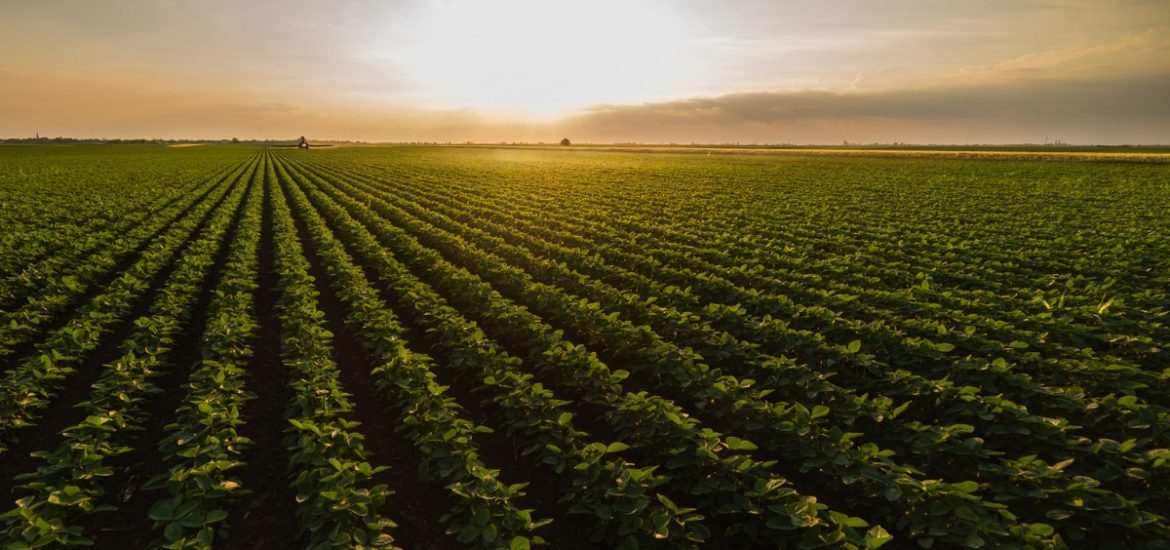 Scientists quantify the impact of boosting photosynthesis on crop yield