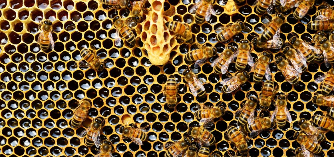 Scientists say beekeeping hurts wildlife