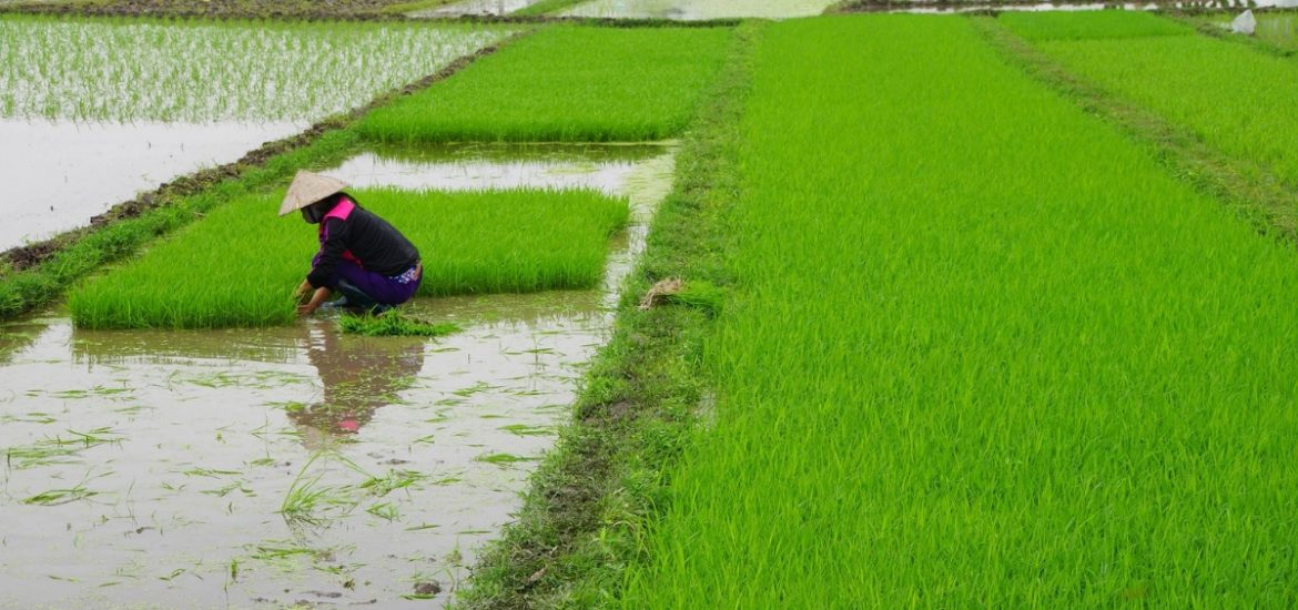 Changes in rainfall could affect global food supplies