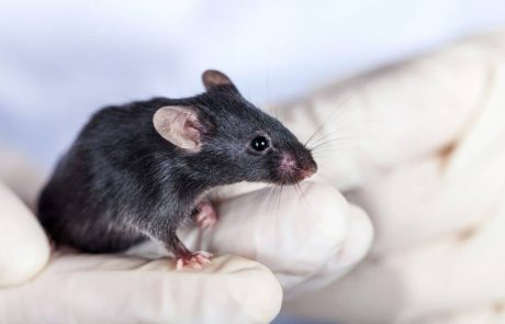 In landmark study scientists restore lost vision in mice