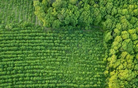 Restoring natural forests should be prioritised to meet climate goals