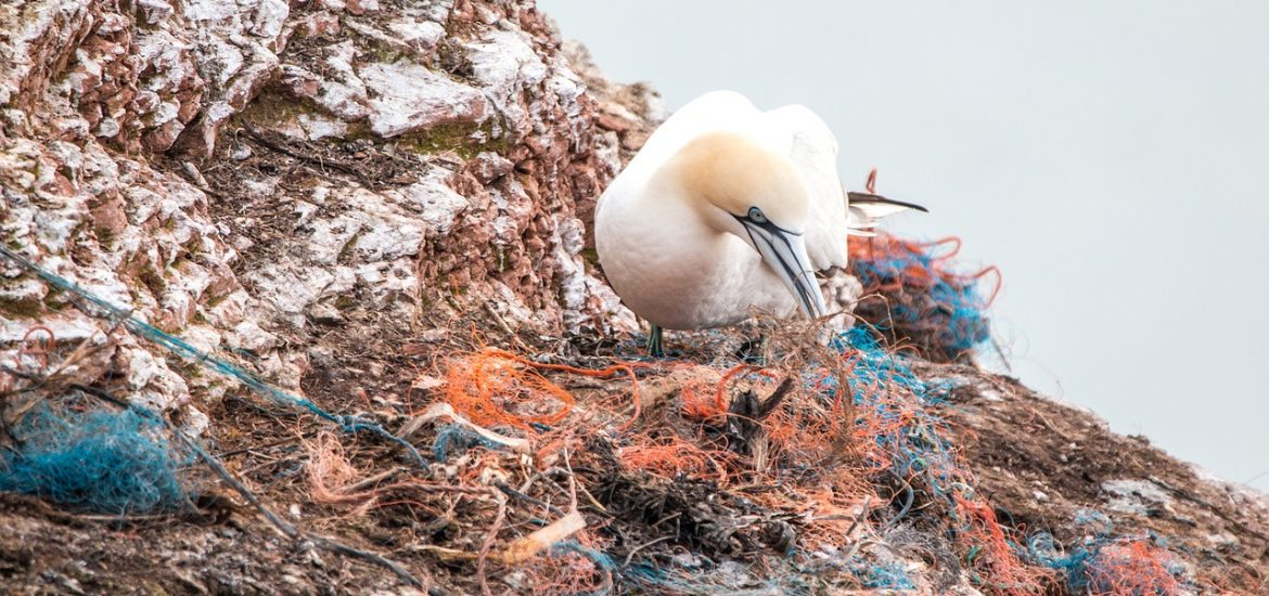 Plastic-eating enzyme could reduce pollution