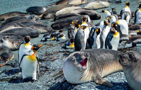 "Seal and penguin poop create ""biodiversity hotspots"" in the Antarctic"