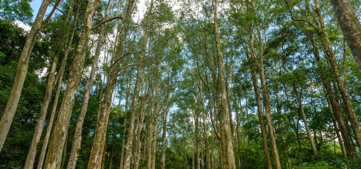 The world's forests are becoming shorter and younger