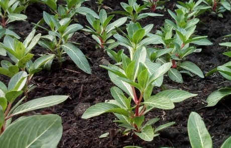 Increasing soil carbon could mitigate climate change and promote global food security