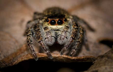 Scientists teach spider to jump with hope of building new robots
