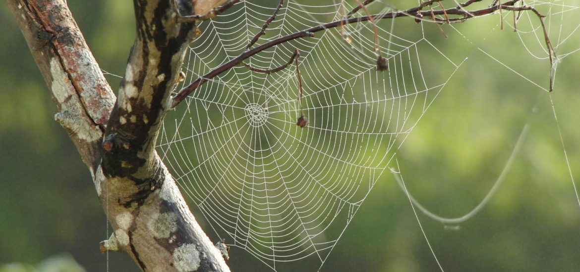 Spiders use electric fields to glide through the air