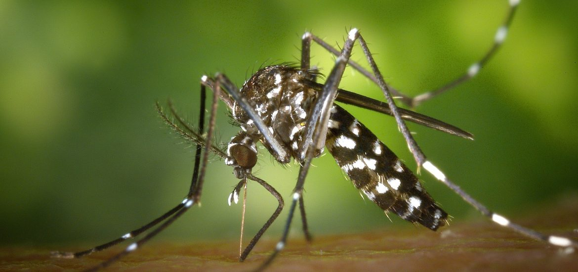 Is Europe prepared to face emerging mosquito-borne diseases?