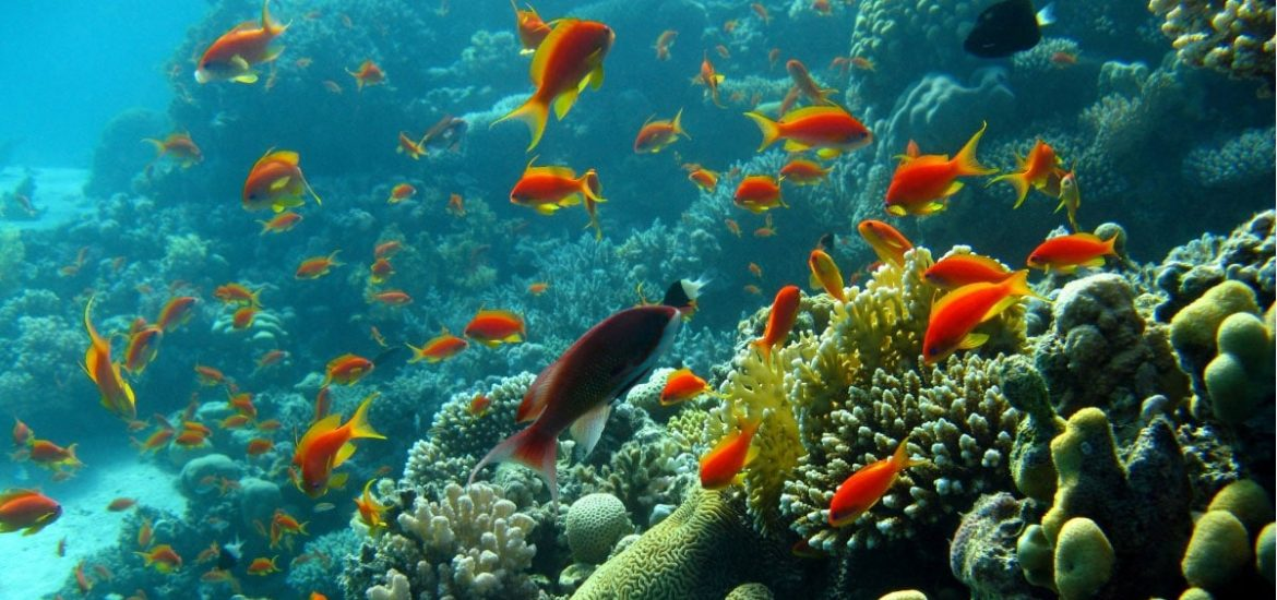 Teeny tiny fish allow coral reefs to flourish in otherwise barren oceans