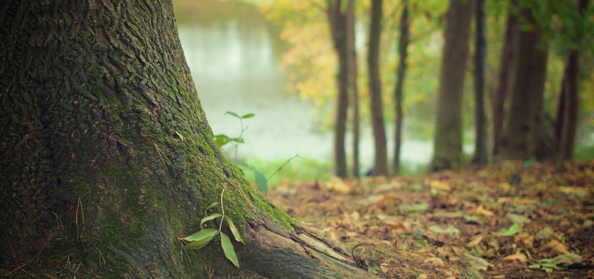 Pollution is causing tree malnutrition in Europe