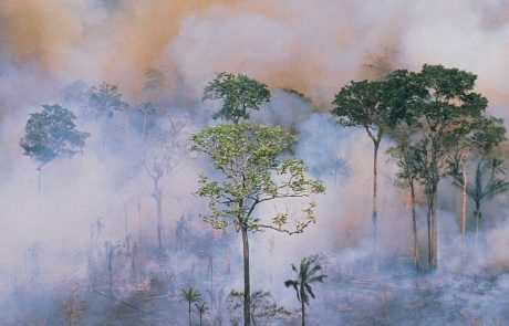 Ability of tropical forests to act as carbon sink is diminishing