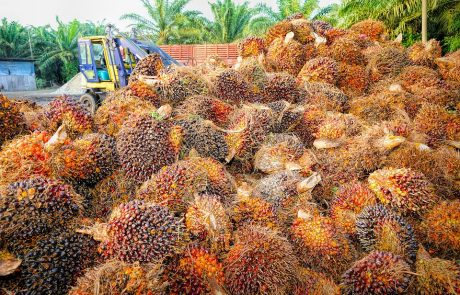 EU caps the use of palm oil in fuels