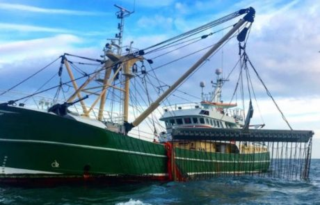 European Parliament votes to end electric pulse fishing