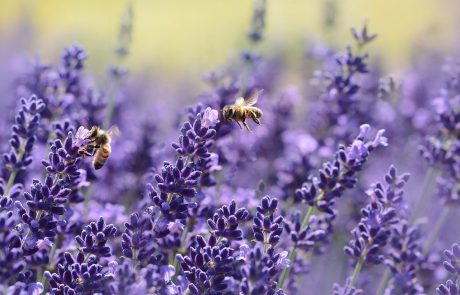 UN Announces May 20 as World Bee Day on Slovenia's initiative