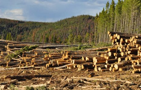 Deforestation is not bad news for all species