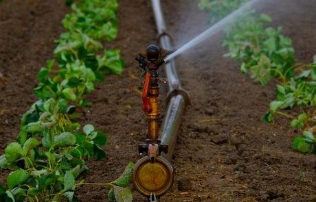 Menschliche Abwässer als Dünger in der Landwirtschaft